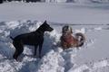 JACK_ARLEIGH_SNOW_005.jpg