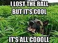 marijuana_dog.jpg